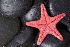 Starfish on black pebbles Stock Images