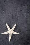 Starfish on black stone background Stock Image