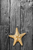 Starfish on Black and White wood floor. Royalty Free Stock Photography