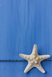 Starfish on a blue colored wood background Royalty Free Stock Image