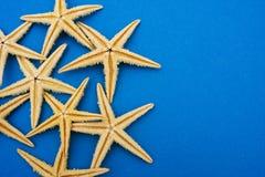 Starfish Border royalty free stock image