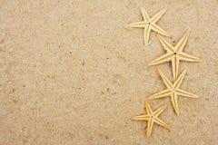 Starfish Border stock images