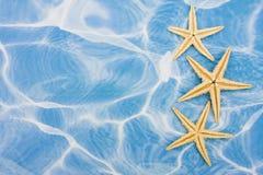 Starfish Border stock photos