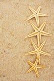 Starfish Border stock photo