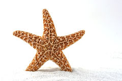 Starfish is Born Royalty Free Stock Image