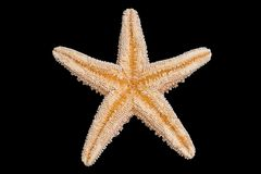 Starfish Bottom stock image
