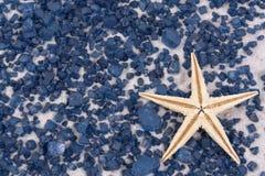 Starfish brancos em rochas pretas Fotos de Stock Royalty Free