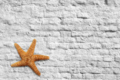 Starfish and brick wall Stock Photos