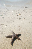 Alive starfish by the sea Stock Images