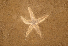 Starfish on brown sand background. There is a starfish on brown sea sand Stock Photography