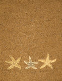 Starfish on brown sand background. There is a starfish on brown sea sand Royalty Free Stock Image