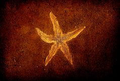 Starfish on brown sand background Stock Images
