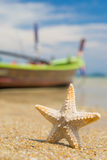 Starfish on caribbean sandy beach Royalty Free Stock Image