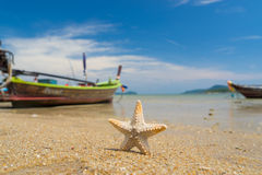 Starfish on caribbean sandy beach Stock Image