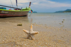 Starfish on caribbean sandy beach Royalty Free Stock Photo