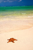 Starfish and Caribbean sea Royalty Free Stock Photography