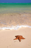 Starfish on caribbean sea Stock Photos