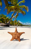 Starfish on caribbean sea beach Royalty Free Stock Photography