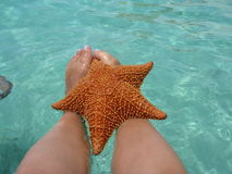 Starfish Caribbean sea ocean exotic Stock Photos