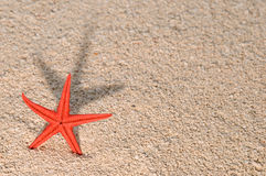 Starfish casting long shadow on golden sand Stock Images