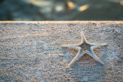 Starfish on a cement floor Stock Images
