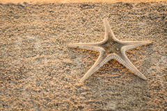 Starfish on a cement floor Royalty Free Stock Photo