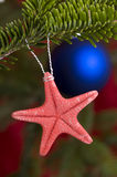 Starfish on Christmas tree Stock Image