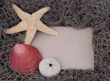 Starfish,  clam shell, sea urchin on message board Stock Images
