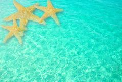 Starfish in Clear Ocean Water Stock Images
