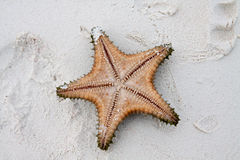 Starfish on clear water. Colored Starfish on white sand and crystal water Royalty Free Stock Photos