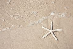 Starfish and clear water on the sandy beach. Background Stock Images