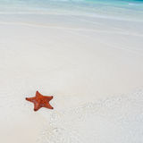 Starfish in clear water Royalty Free Stock Photo