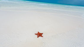 Starfish in clear water Stock Photos