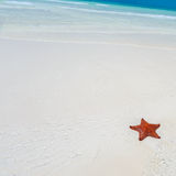 Starfish in clear water Stock Images