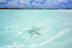 Starfish in clear water Stock Photography