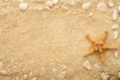 Starfish on the coastal sand. Royalty Free Stock Image