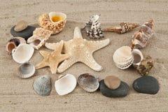 Starfish and cockleshells Stock Images