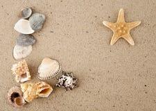 Starfish and cockleshells Royalty Free Stock Photography