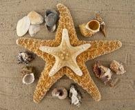Starfish and cockleshells Stock Photography
