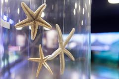 Starfish collection Stock Images
