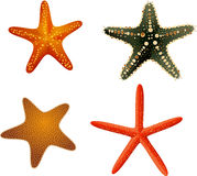 Starfish collection colourful on a white background Royalty Free Stock Images