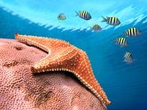 Starfish colors Stock Image