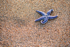 Starfish com a areia como o fundo, seletivo Imagens de Stock Royalty Free