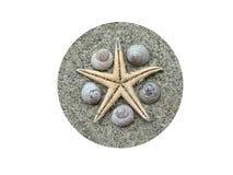 Starfish com escudos Imagem de Stock Royalty Free