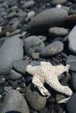 Starfish com fundo rochoso Foto de Stock Royalty Free