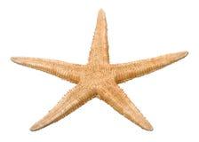 Starfish. Common starfish sea star closeup Stock Photos