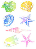 Starfish and conch. Drawing of beautiful starfish,conch and scallop Stock Images