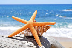Starfish and conch on an old washed-out tree trunk in the beach. Closeup of a starfish and a conch on an old washed-out tree trunk in the beach, with a bright Royalty Free Stock Photo