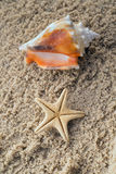 Starfish and conch Royalty Free Stock Image