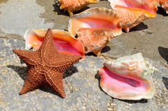Starfish and Conch Shells. On display for sales to tourists on a pier in Nassau,Grand Bahamas royalty free stock photos